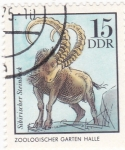Stamps Germany -  Zoológico de Halle- Cabra montés