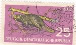 Stamps Germany -  Castor