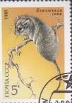 Stamps Russia -  protecion animal