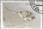 Stamps : Europe : Russia :  protecion animal