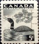 Stamps : America : Canada :  Intercambio jlm 0,20 usd 5 cent 1957