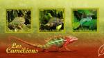 Sellos del Mundo : Africa : Djibouti : camaleones reptiles