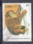 Sellos del Mundo : America : Cuba : Orangután (Pongo pygmaeus)