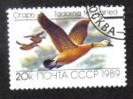 Stamps Russia -  Tadorna ferruginea