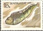 Stamps Russia -  PECES.  ANARHICHAS  MINOR