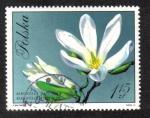 Sellos de Europa - Polonia -  Japanese Magnolia