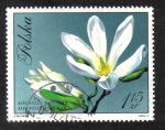 Stamps Poland -  Japanese Magnolia