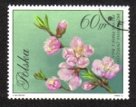 Sellos de Europa - Polonia -  Flores en colores naturales