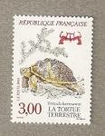 Stamps France -  Tortuga