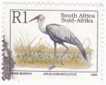 Stamps : Africa : South_Africa :  grulla carunculatus