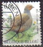 Sellos de Europa - Bélgica -  BELGICA 2005 Michel 3431 SELLO ANIMALES PAJAROS AVES PERDIZ GRIS