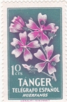 Stamps Spain -  flores- TANGER (20)