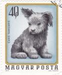 Stamps Hungary -  cachorro de perro