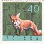 Stamps Poland -  zorro