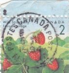Stamps : America : Canada :  fruta- fresas