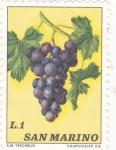 Stamps San Marino -  flora- racimo de uva
