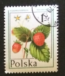 Stamps Poland -  Fresas