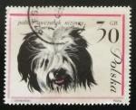 Sellos de Europa - Polonia -  Perro pastor polaco