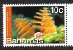 Sellos de America - Bahamas -  Bahamas Vida Marina