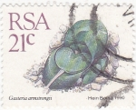 Stamps : Africa : South_Africa :  planta suculenta