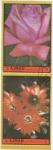 Stamps United Arab Emirates -  flores- AJMAN