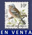 Sellos de Europa - Bélgica -  BÉLGICA Pinson 10