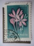 Stamps Hungary -  Colchicum Arenarium.