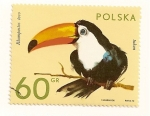 Stamps Poland -  Animales del zoo. Tucan