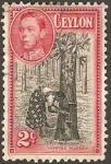Sellos de Asia - Sri Lanka -  252 - Árbol de caucho