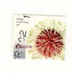 Stamps : Oceania : Australia :  Hakea