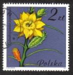 Stamps Poland -  Cylindropuntia leptocaulis, Cactaceae
