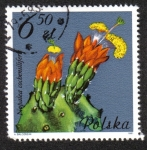 Stamps Poland -  Nopalea cochenillifera, Cactaceae