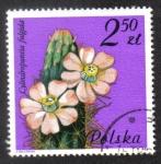 Sellos de Europa - Polonia -  Cylindropuntia fulgida, Cactaceae