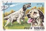 Stamps Romania -  Brno-90 exposición mundial canina