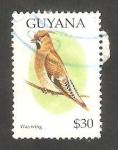 Stamps Guyana -  Ave waxwing bohemio
