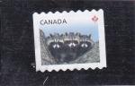 Sellos de America - Canadá -  mapaches