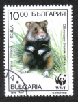 Sellos de Europa - Bulgaria -  Hamsters