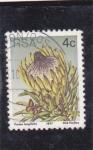 Sellos de Africa - Sudáfrica -  flora- Protea longifolia