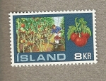 Stamps Europe - Iceland -  Invernadero tomates