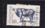 Stamps Bulgaria -  vaca