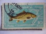 Stamps Romania -  R.P. Romina.