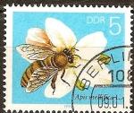Sellos de Europa - Alemania -  La abeja de la miel.Apis mellifera L. en una flor de la fruta(DDR).