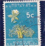 Stamps : Africa : South_Africa :  baobab