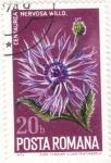 Sellos de Europa - Rumania -  flores-