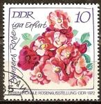 Sellos de Europa - Alemania -  Exposición Internacional de Rosas,1972 en DDR-Berger Rose.