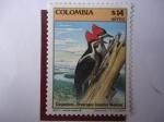 Sellos de America - Colombia -  Carpinteros - Dryocopus Lineatus Nuperus.