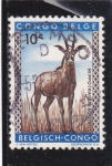 Stamps Republic of the Congo -  hippotragus equinus