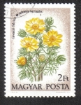 Stamps Hungary -  Ranúnculos