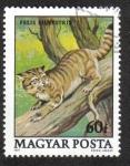 Sellos de Europa - Hungría -  Gato montés ( Felis silvestris )