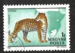 Sellos de Europa - Hungría -  Fauna of Africa (1981)